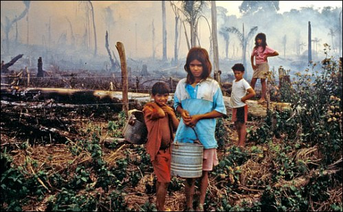 more palm oil plantations cause more slash-&-burn elsewhere in the forest