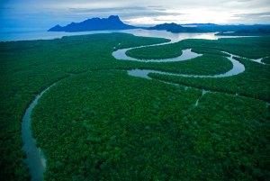 Sarawak Mangrove Reserve, Borneo