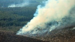 orangutan habitat being burnt to the ground
