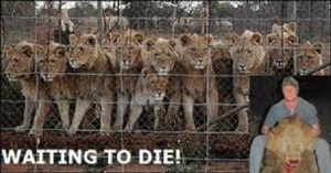 lion industry - waiting to die