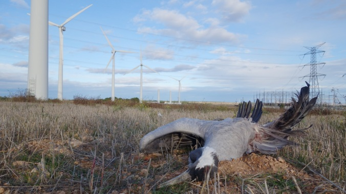 Image result for birds killed by wind turbines