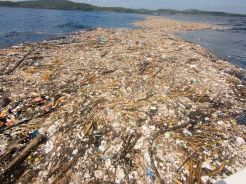 Sea of plastic near