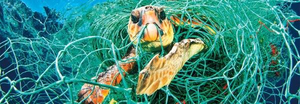 želva zapletena